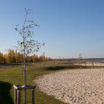 Strandgestaltung Bärwalder See, Uhyst